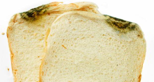 Fungus-bread