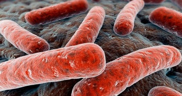 Killer E.coli strain decoded