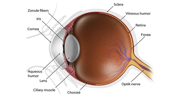 Donor age not a factor in most corneal transplants