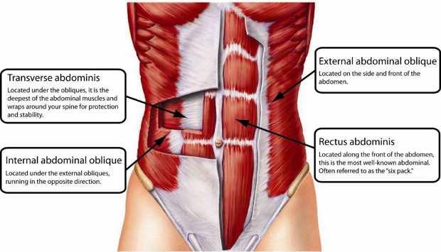 abdomen muscles