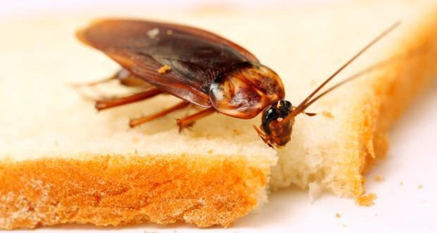 7 ways cockroaches are bad for your health (and 8 ways to get rid of