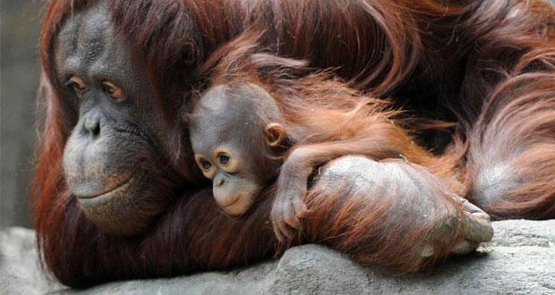 Love hormone helps animal bond