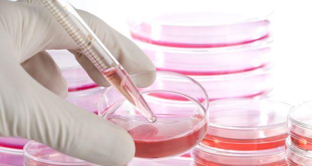 stem-cell
