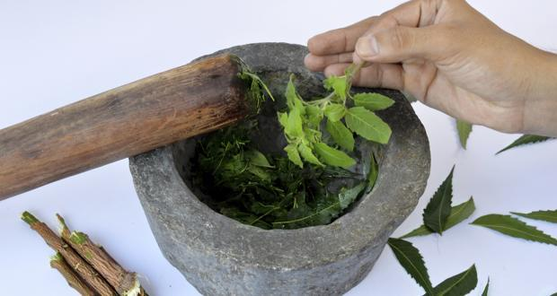Chew tulsi leaves to get rid of common cold and cough
