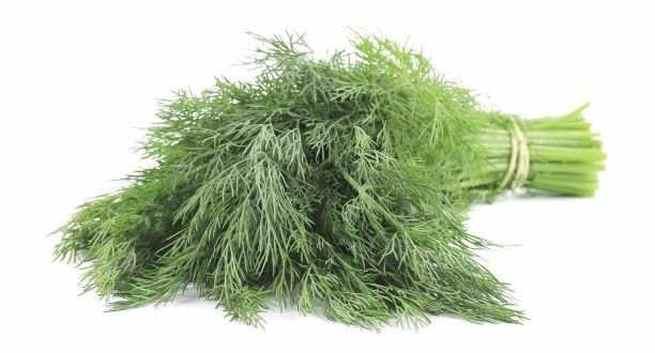 Dill leaves maintaining hormonal balance