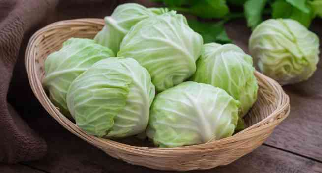 Cabbage hindi