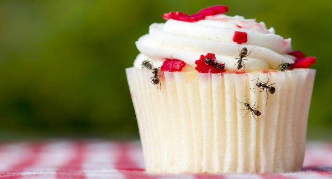 Get rid of ants hindi
