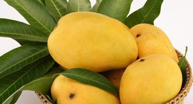 Mangoes summer food for health