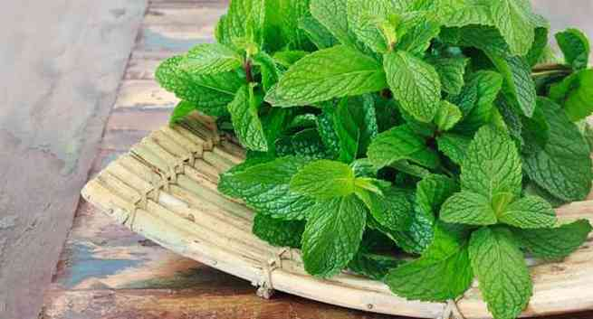 Healthy herbs available in india