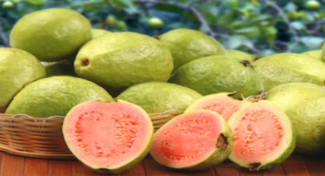 Guava benefits in winter