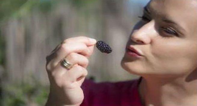eating-mulberrie