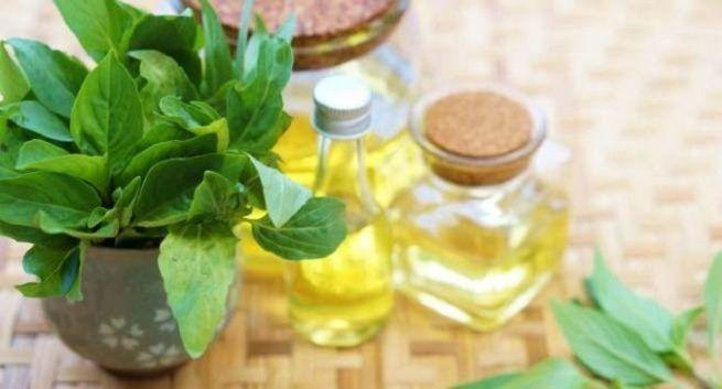 Basil-oils