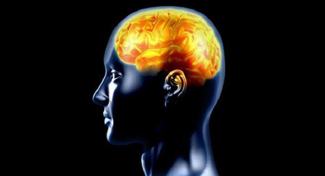 Improves brain function
