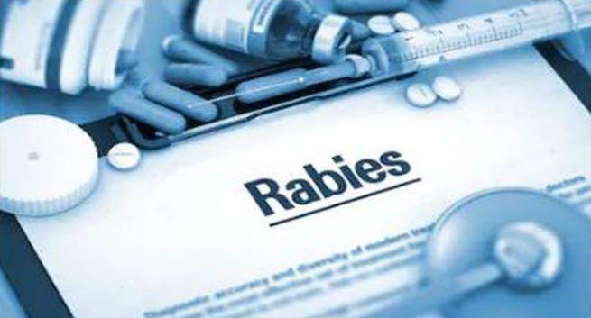 Rabies causes, Rabies, Rabies symptoms, Dog byte