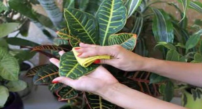 keep indoor plants to avoid air pollution