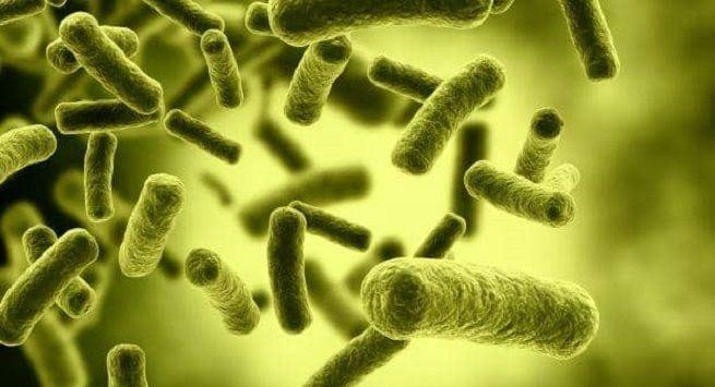 Bacteria3 1
