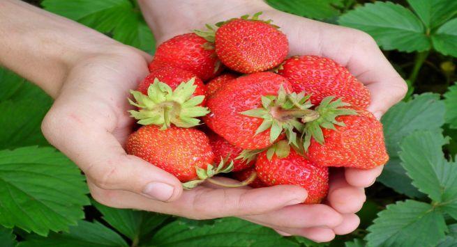 Strawberry boosts Immunity